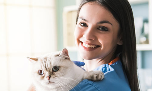 Beautiful young veterinarian is holding cute cat