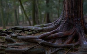 tree roots and green forest
