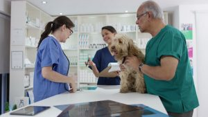 Vet and technician examining a dog