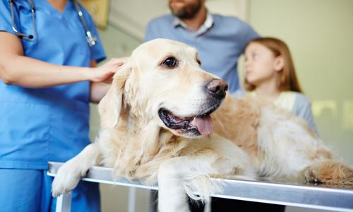 Dog on medical table