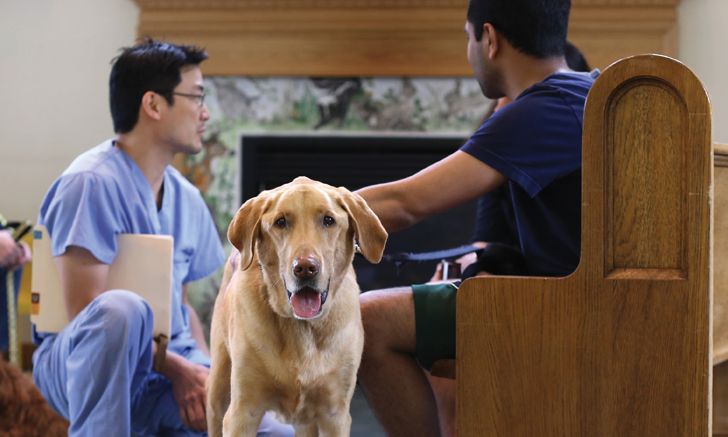 Dog Standing and Vet Professional Explaining in background