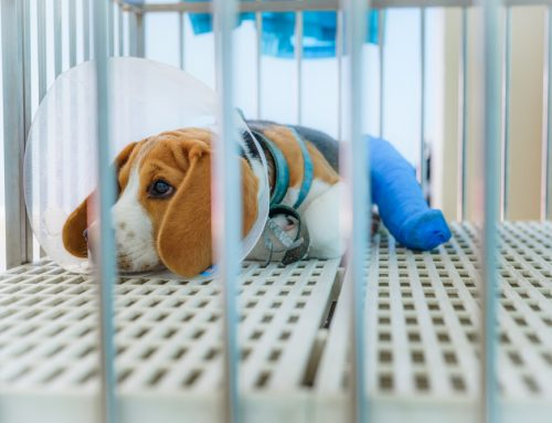 Setting Hospitalization and Therapeutic Standards in Your Veterinary Hospital