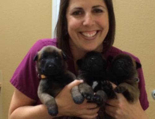 Dawn Boman: Female Veterinary Practice Ownership Series